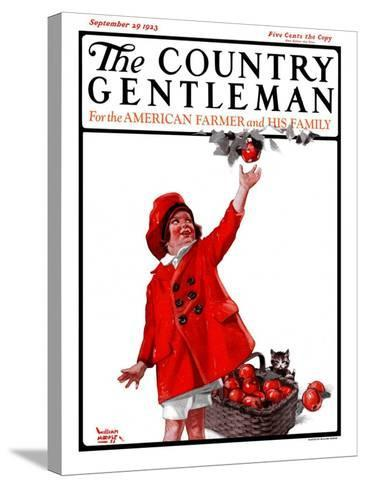 """""""Picking Apples,"""" Country Gentleman Cover, September 29, 1923-WM. Hoople-Stretched Canvas Print"""