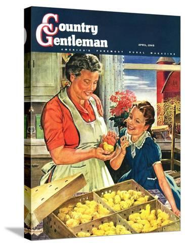 """""""Crate of New Baby Chicks,"""" Country Gentleman Cover, April 1, 1945-W^C^ Griffith-Stretched Canvas Print"""