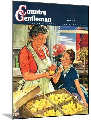 """""""Crate of New Baby Chicks,"""" Country Gentleman Cover, April 1, 1945-W^C^ Griffith-Mounted Giclee Print"""