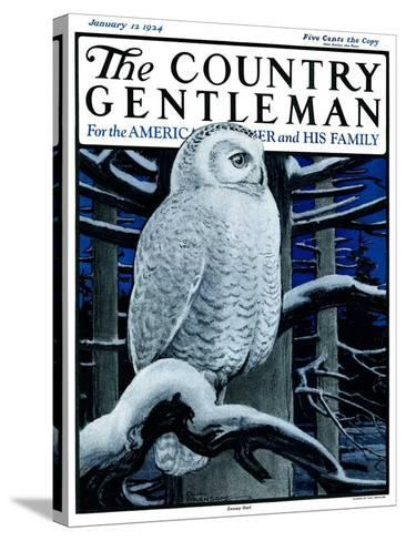 """""""Snowy Owl in Forest at Night,"""" Country Gentleman Cover, January 12, 1924-Paul Bransom-Stretched Canvas Print"""