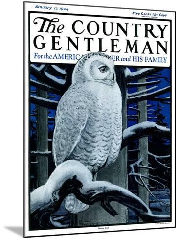 """""""Snowy Owl in Forest at Night,"""" Country Gentleman Cover, January 12, 1924-Paul Bransom-Mounted Giclee Print"""