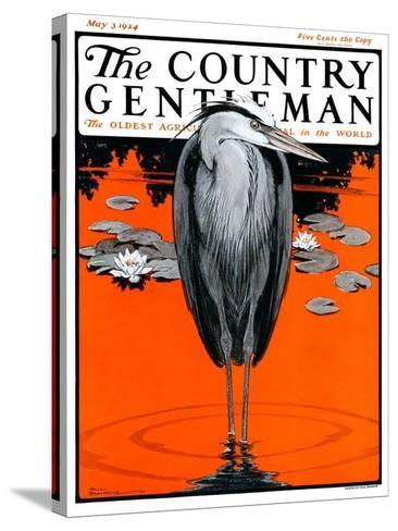 """Crane and Lilly Pads,"" Country Gentleman Cover, May 3, 1924-Paul Bransom-Stretched Canvas Print"