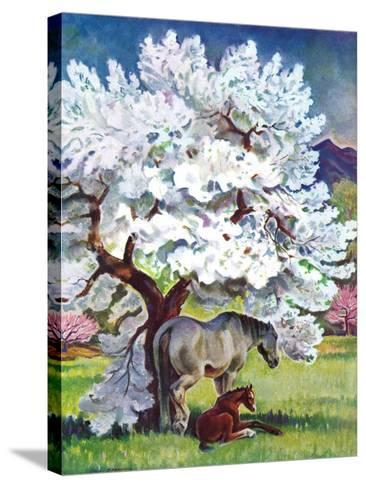 """""""Horses and Tree Blossoms,""""May 1, 1940-Paul Bransom-Stretched Canvas Print"""