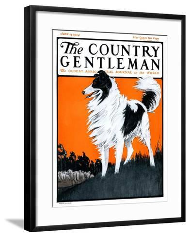 """Sheepdog Oversees Flock,"" Country Gentleman Cover, June 14, 1924-Paul Bransom-Framed Art Print"