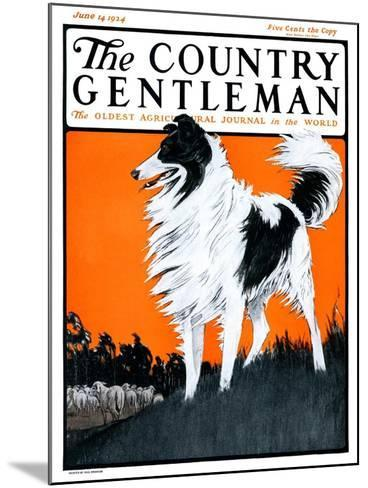 """Sheepdog Oversees Flock,"" Country Gentleman Cover, June 14, 1924-Paul Bransom-Mounted Giclee Print"