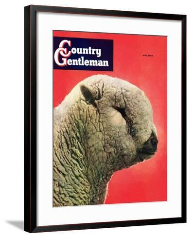 """""""Lamb,"""" Country Gentleman Cover, May 1, 1948-Stanley Johnson-Framed Art Print"""
