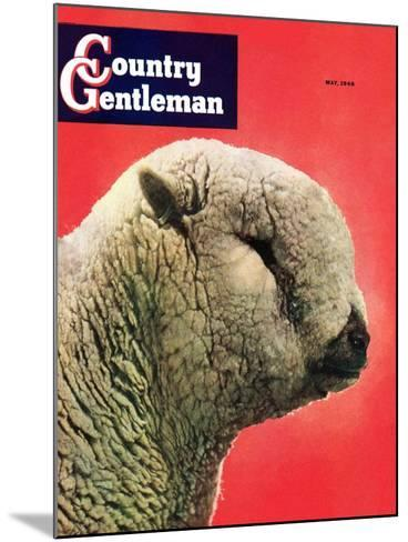 """""""Lamb,"""" Country Gentleman Cover, May 1, 1948-Stanley Johnson-Mounted Giclee Print"""