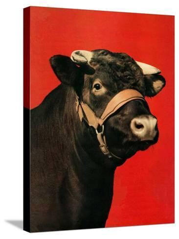 """""""Black Bull,""""February 1, 1944-Salvadore Pinto-Stretched Canvas Print"""