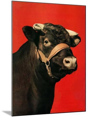 """Black Bull,""February 1, 1944-Salvadore Pinto-Mounted Giclee Print"