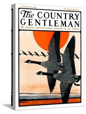 """""""Flock of Geese in Formation,"""" Country Gentleman Cover, November 15, 1924-Paul Bransom-Stretched Canvas Print"""
