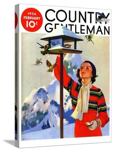 """""""Feeding the Birds,"""" Country Gentleman Cover, February 1, 1936-Jack Murray-Stretched Canvas Print"""