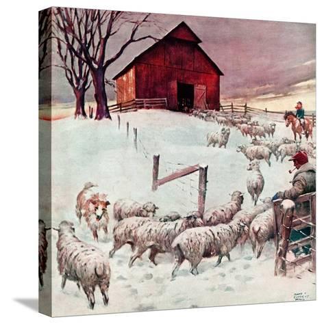 """Herding Sheep into Barn,""February 1, 1946-Matt Clark-Stretched Canvas Print"
