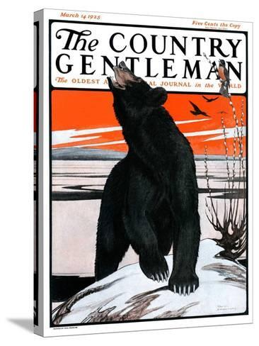 """""""Bear and Robin Welcome Spring,"""" Country Gentleman Cover, March 14, 1925-Paul Bransom-Stretched Canvas Print"""
