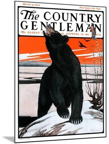 """""""Bear and Robin Welcome Spring,"""" Country Gentleman Cover, March 14, 1925-Paul Bransom-Mounted Giclee Print"""
