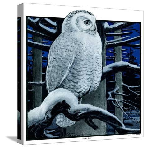"""""""Snowy Owl in Forest at Night,""""January 12, 1924-Paul Bransom-Stretched Canvas Print"""