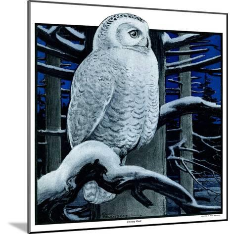 """""""Snowy Owl in Forest at Night,""""January 12, 1924-Paul Bransom-Mounted Giclee Print"""