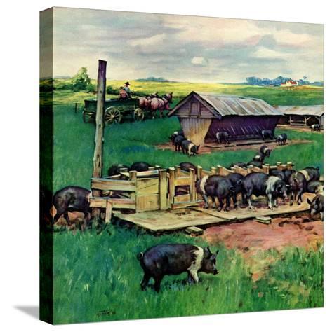 """Pigs Feeding,""September 1, 1946-Matt Clark-Stretched Canvas Print"