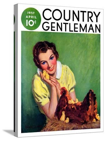 """Baby Chicks,"" Country Gentleman Cover, April 1, 1937-Tom L. Chore-Stretched Canvas Print"