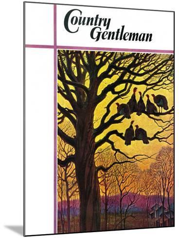 """Wild Turkeys Roosting,"" Country Gentleman Cover, November 1, 1938-Paul Bransom-Mounted Giclee Print"