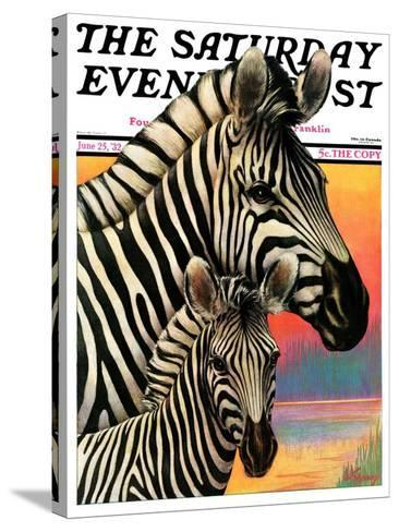 """""""Zebras,"""" Saturday Evening Post Cover, June 25, 1932-Jack Murray-Stretched Canvas Print"""