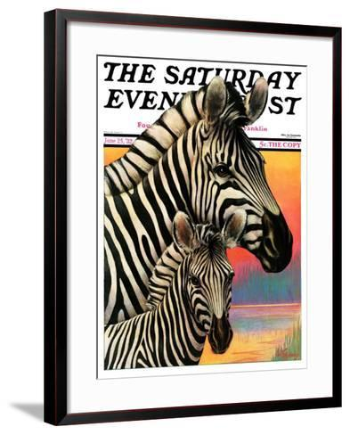 """Zebras,"" Saturday Evening Post Cover, June 25, 1932-Jack Murray-Framed Art Print"