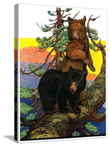 """Bears in Tree,""August 16, 1930-Charles Bull-Stretched Canvas Print"