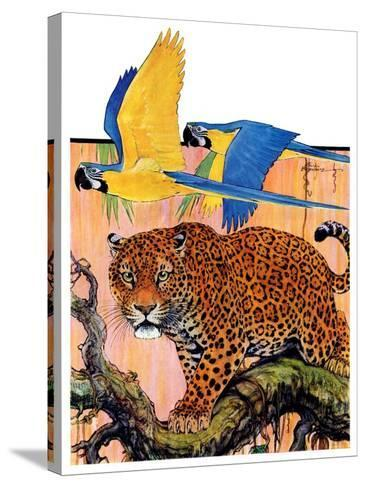 """Leopard and Parrots in Jungle,""September 2, 1933-Paul Bransom-Stretched Canvas Print"