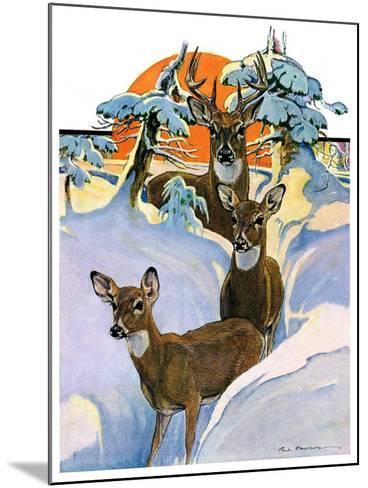 """Deer in Snow,""February 7, 1931-Paul Bransom-Mounted Giclee Print"