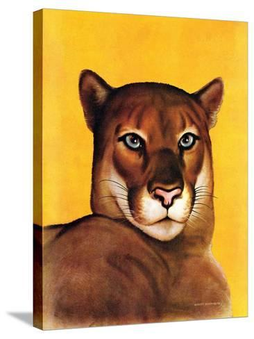 """""""Mountain Lions,""""September 25, 1937-August Schombrug-Stretched Canvas Print"""