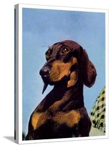 """Dachshund,""May 14, 1938-Ivan Dmitri-Stretched Canvas Print"