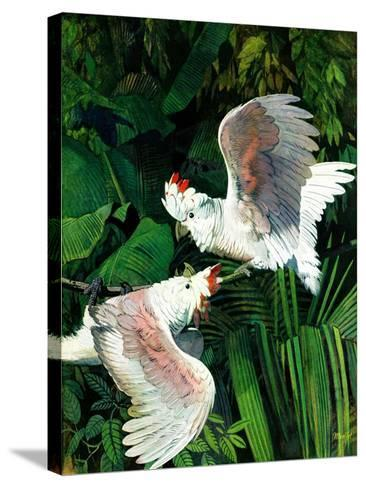 """""""Two Cockatoos,""""September 3, 1938-Julius Moessel-Stretched Canvas Print"""