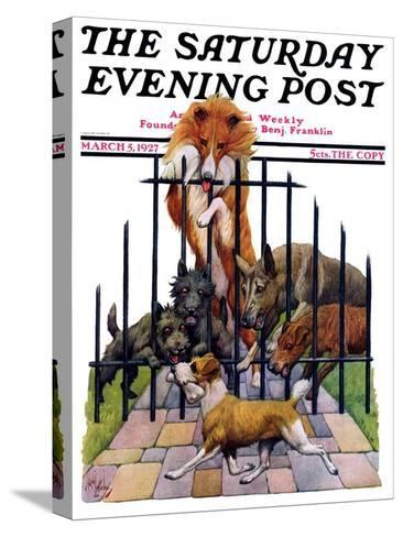"""""""Dog and His Bone,"""" Saturday Evening Post Cover, March 5, 1927-Robert L^ Dickey-Stretched Canvas Print"""