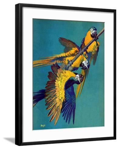 """Three Parrots,""March 11, 1939-Julius Moessel-Framed Art Print"