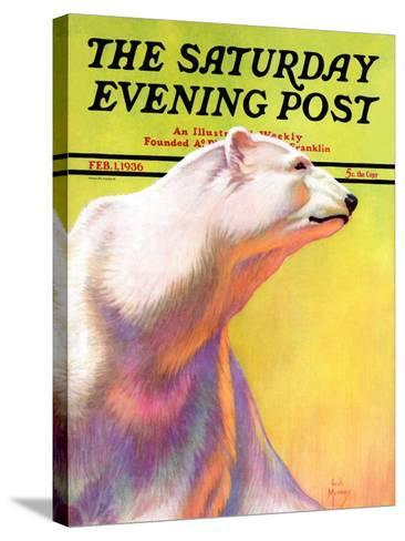 """""""Polar Bear,"""" Saturday Evening Post Cover, February 1, 1936-Jack Murray-Stretched Canvas Print"""