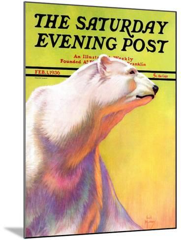 """Polar Bear,"" Saturday Evening Post Cover, February 1, 1936-Jack Murray-Mounted Giclee Print"