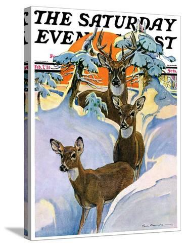 """""""Deer in Snow,"""" Saturday Evening Post Cover, February 7, 1931-Paul Bransom-Stretched Canvas Print"""