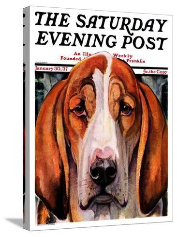 """""""You Ain't Nothing But a Hounddog,"""" Saturday Evening Post Cover, January 30, 1937-Paul Bransom-Stretched Canvas Print"""