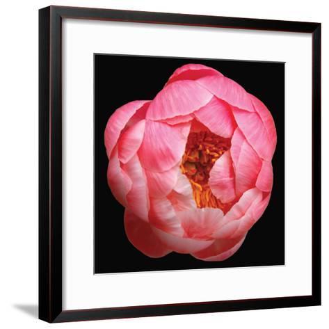 Peony-Katano Nicole-Framed Art Print