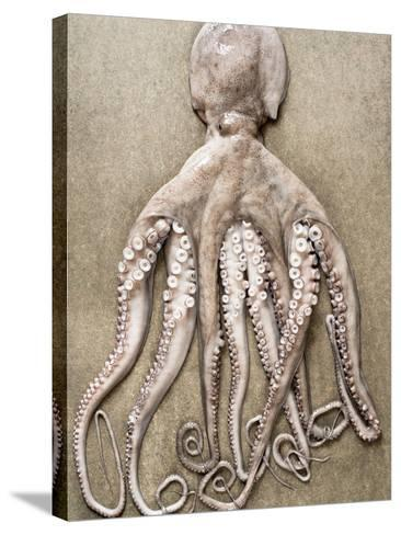 An Entire Octopus-Sarka Babicka-Stretched Canvas Print