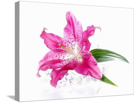 A Pink Lilly--Stretched Canvas Print