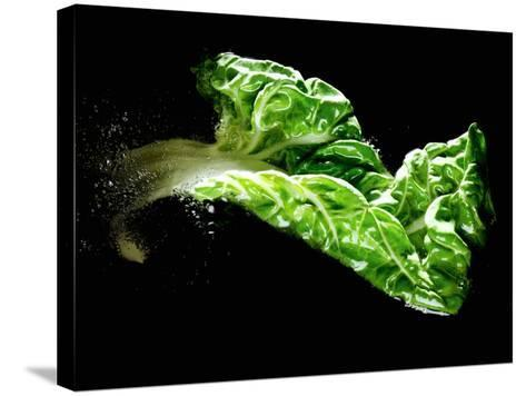 A Chard Leaf in Oil--Stretched Canvas Print