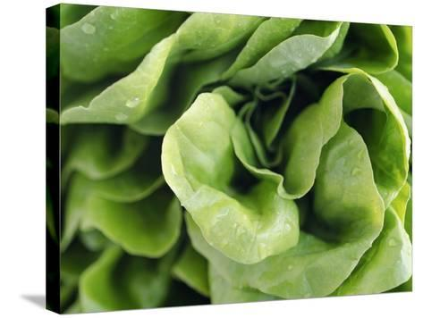 Green Lettuce-Clara Gonzalez-Stretched Canvas Print