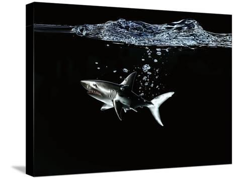 A Shark under Water-Hermann Mock-Stretched Canvas Print