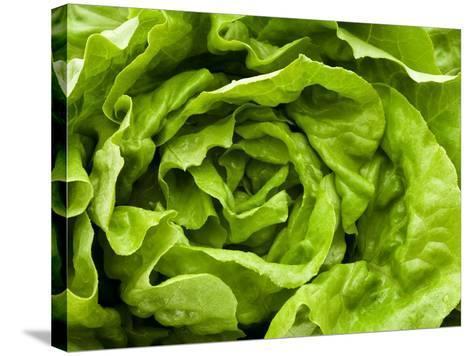 Fresh Lettuce-Greg Elms-Stretched Canvas Print