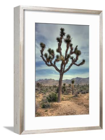 Joshua Tree Scene-Vincent James-Framed Art Print
