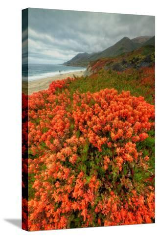 Summer Morning Coastal Color-Vincent James-Stretched Canvas Print