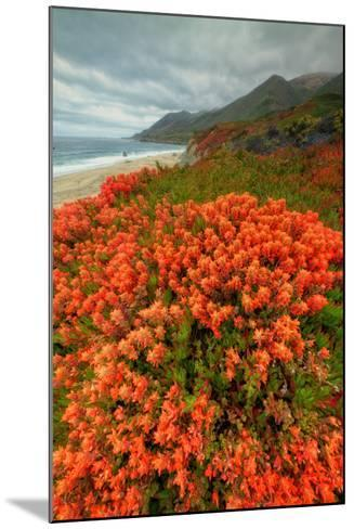 Summer Morning Coastal Color-Vincent James-Mounted Photographic Print