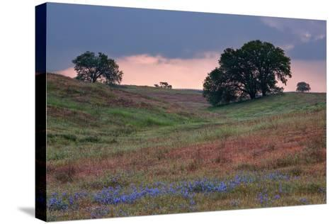 Late Afternoon, Central California-Vincent James-Stretched Canvas Print