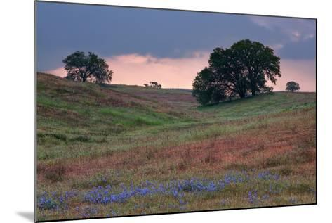 Late Afternoon, Central California-Vincent James-Mounted Photographic Print