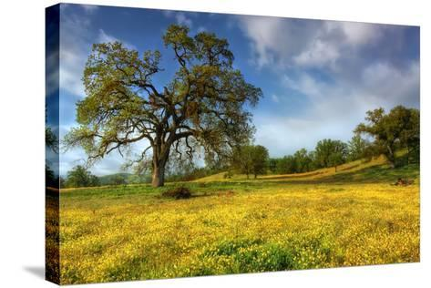 Spring at Shell Creek-Vincent James-Stretched Canvas Print